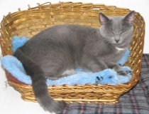 a cat in bed