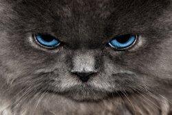 Funny Kitten 2