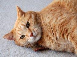 Cat Enjoying Catnip