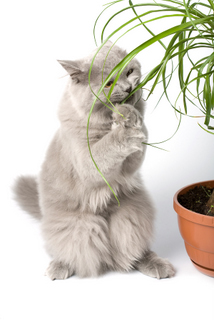 Cat Eating Plant