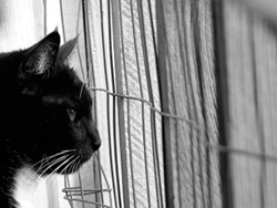 black and white cat photo
