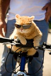 Funny Cat Biker