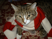 Max celebrating Christmas 2004