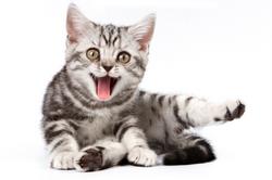 Very Funny Cat