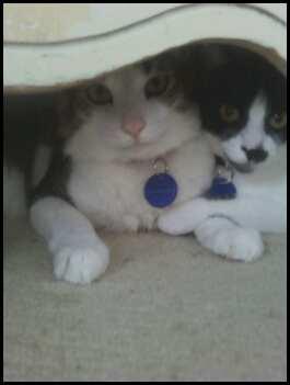 Under the Dresser