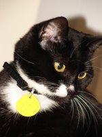 Cat Wearing Cat Collar