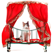 a cat in red bed
