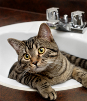 cat in sink