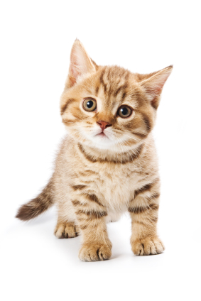 Celtic Cat Names for Cute Kittens