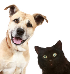 dog and cat pet names
