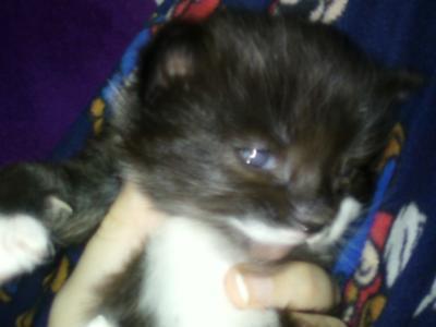My adorable baby Ianto