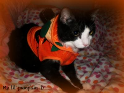 Panda's Halloween Costume :)