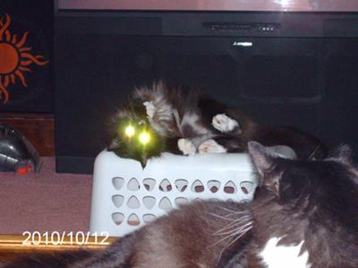 Freddy Those Headlights!
