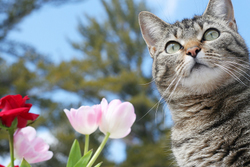 Tabby Cat with Flowers