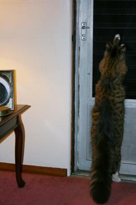 Teddy Bearz 12 Months (Pic lightened)
