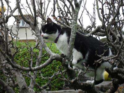 Tree climbing cat