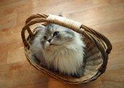 cat gift basket