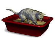 cat using litterbox