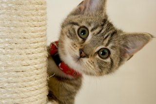 Another Cute Kitten