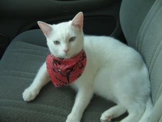 Jenibelle cat