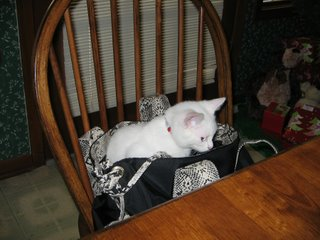Jenibelle cat inside bag
