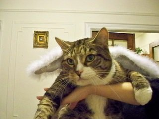 Max Cat dressed up as an angel