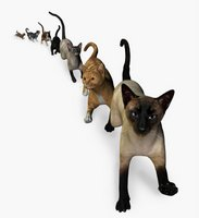 picture of different cat breeds