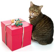 find unique cat gifts