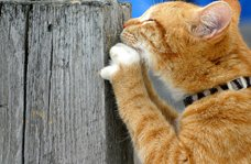 Cat Scratching a Post