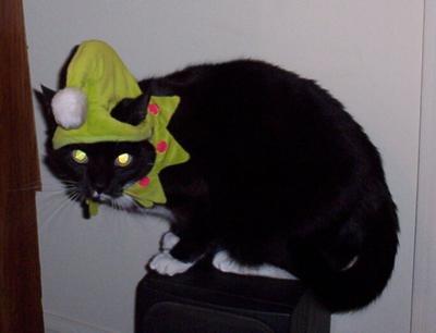 Elfin Kitty