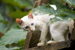 Funny Kitten Pic