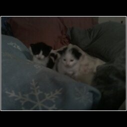 THE NEW KITTENS