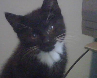 Kitty-Meow as a kitten.