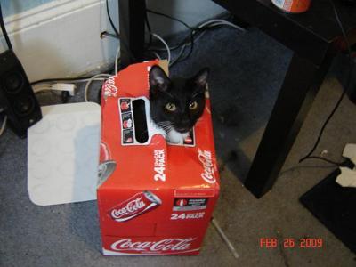 Cola anyone?