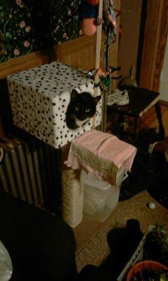 Him in his birdhouse