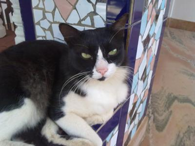 my sweet cat MINO