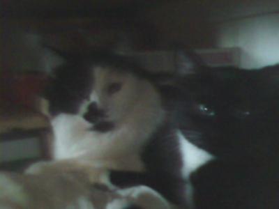 Nella and Bingo 2nd cuddle.