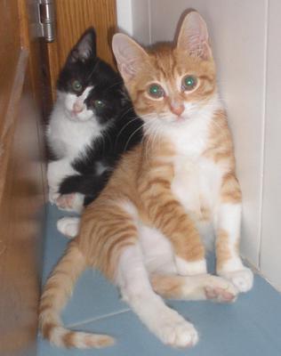 Marley & Randy - on their adoption day